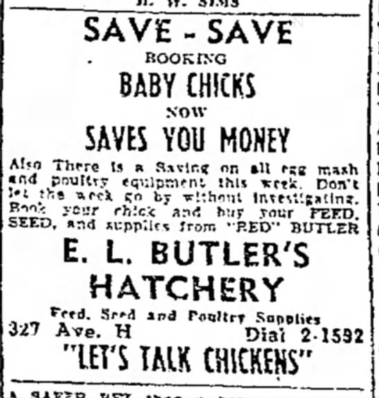 - SAVE - SAVE BABY CHICKS sow SAVES YOU MONEY...