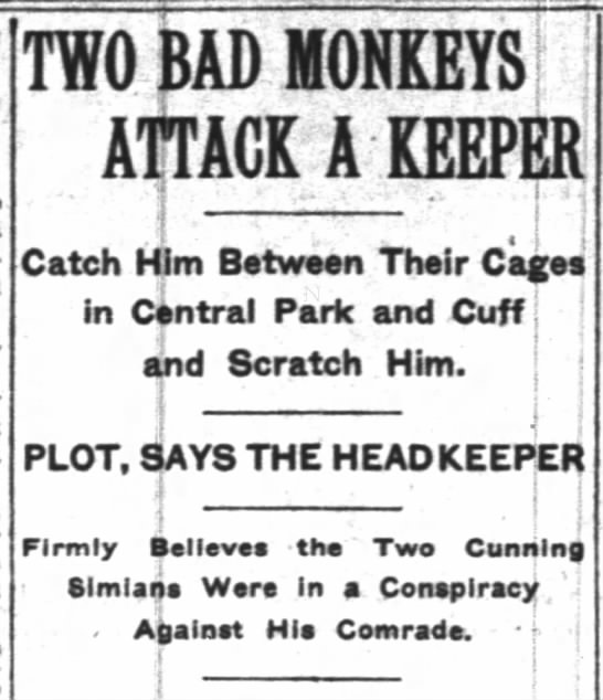 """Zookeeper Attacked in """"Monkey Plot"""" - TWO BAD MONKEYS j ; ATTACK A KEEPE Catch Him..."""