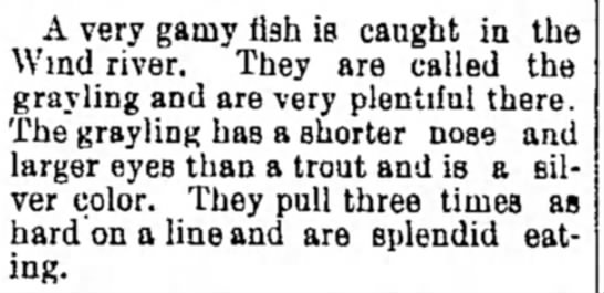 1891 Wind River grayling - complaint I'tah in the A very gamy fish is...