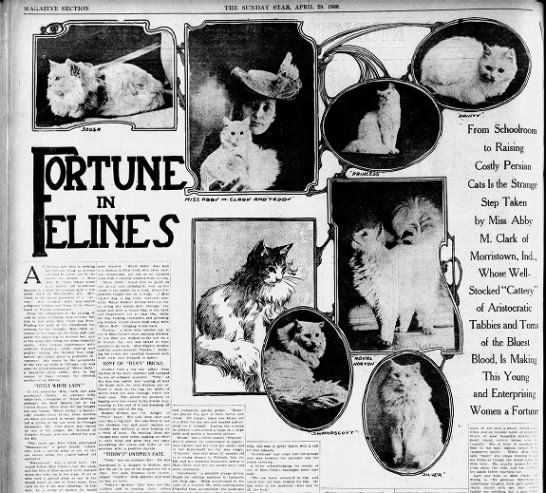 Fortune in Felines, 1906 - THE SUNDAY STAR, APRIL 29, 190C. MAGAZINE...
