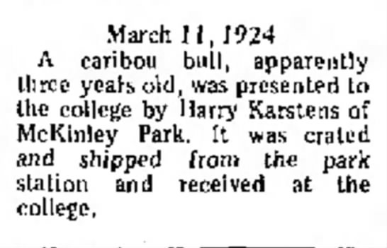- in March 11,1924 A caribou bull, apparently...