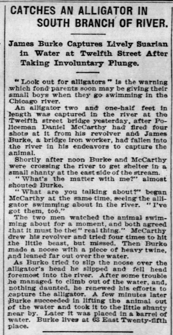 Catches an Alligator in South Branch of RIver, Chicago Tribune, July 8, 2902, p. 16.