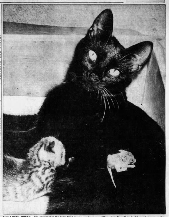 1950: Cat adopts baby field mouse