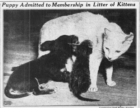 1937: Cat adopts a puppy