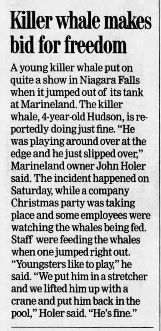 Marineland Canada, orca, Hudson, jumps out of pool, 20021210 - Killer whale makes bid for freedom A young...
