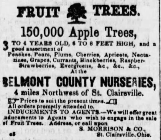 Shannon Morrison - FETJIT Q TEEES. 150,000 Apple Trees, 3 TO 4...