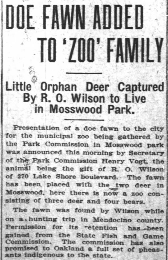 orphan deer for Mosswood Zoo