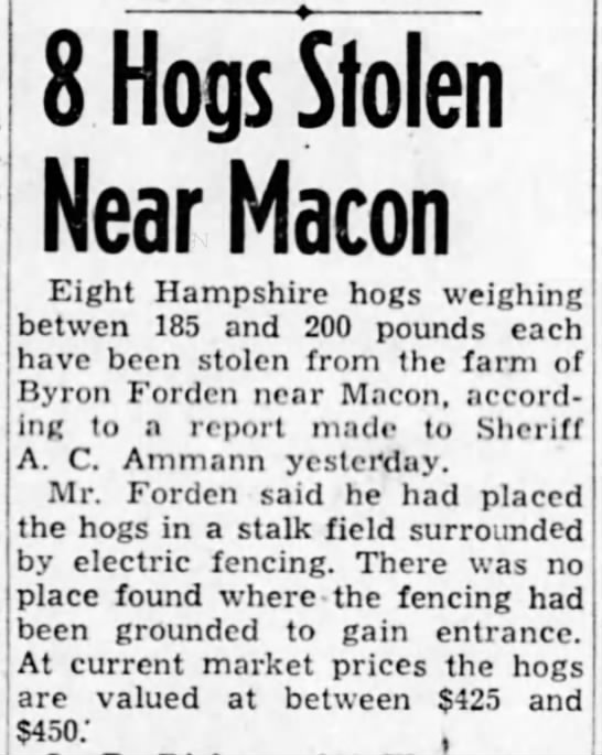 FORDEN Byron - 8 hogs stolen - 8 Hogs Stolen Near Macon Eight Hampshire hogs...