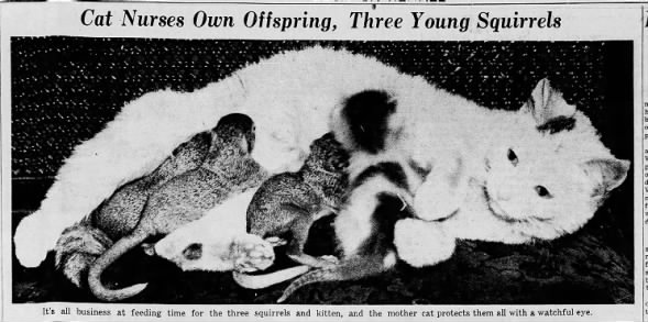 1938: Cat adopts 3 baby squirrels