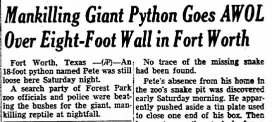Giant Man-killing Python Escapes from Zoo - child or first, nv /tnnt I ft fi /uufifciuifi...