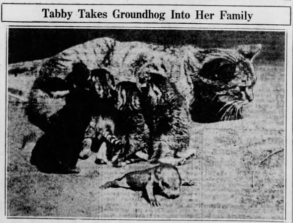 1930: Cat adopts a baby groundhog