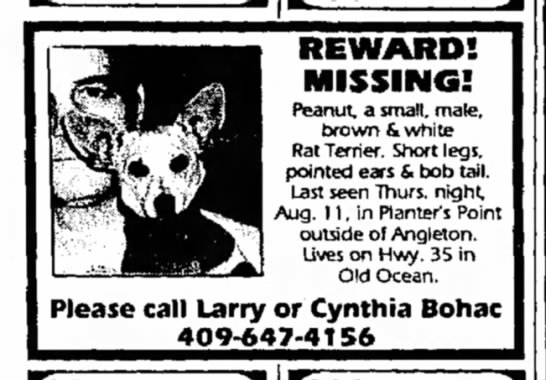Clute TX The Facts 21Aug1994 - REWARD! MISSING! Peanut, a small, male, brown &...