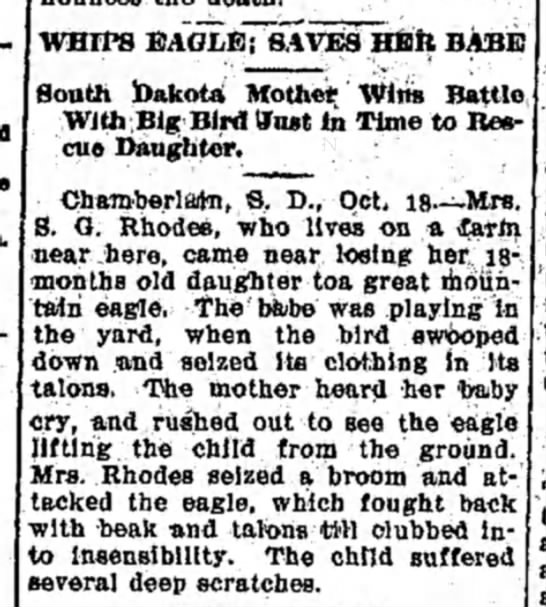 Eagle snatches baby -