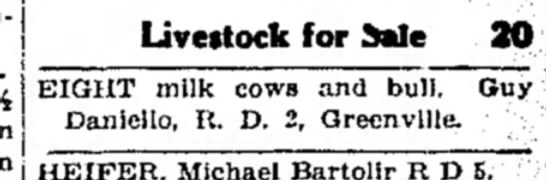 - Livestock for dale 20 EIGHT milk cows and bull....