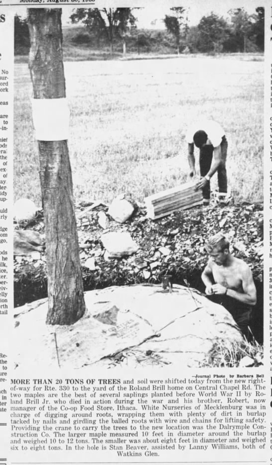 330 trees, August 30, 1965 -