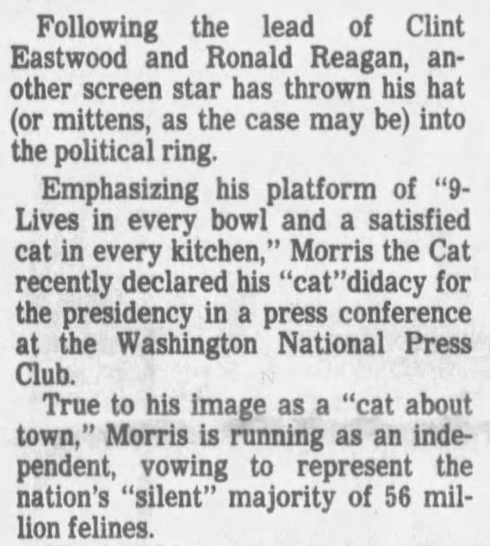 Morris the Cat running for president -