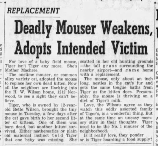 1950: Cat adopts baby field mouse -