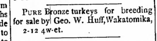 George W. Huff sales turkeys - three months grade PURE BJronze turkeys for...