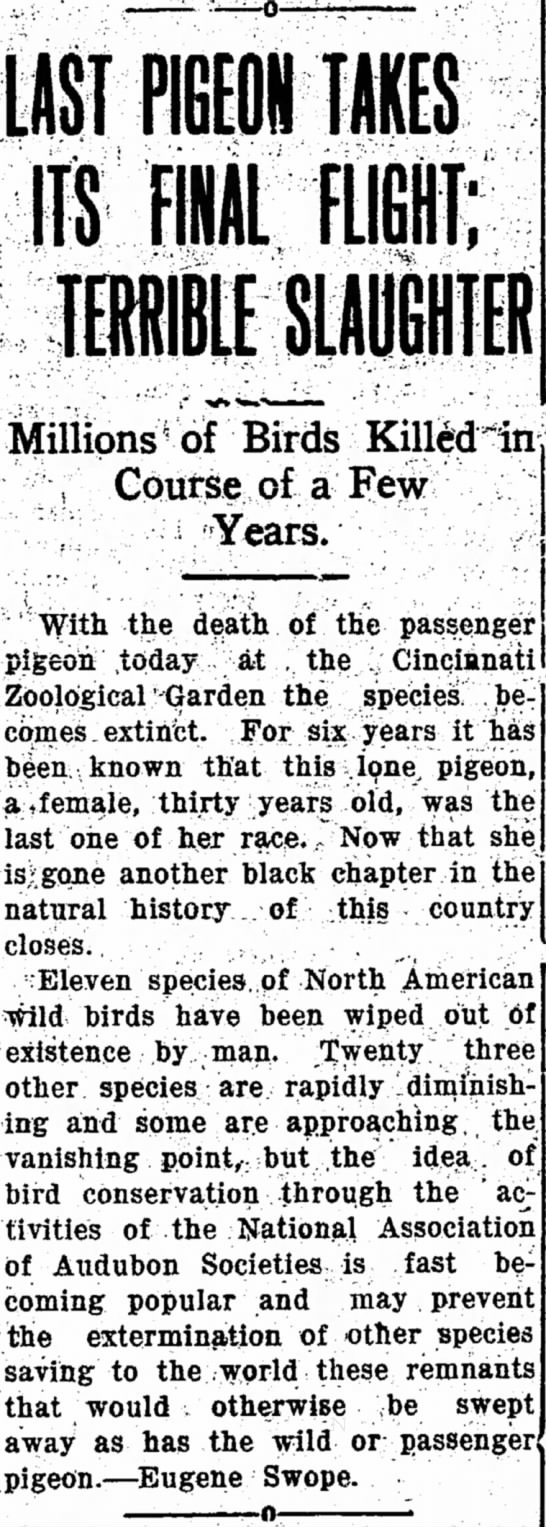 The extinction of the passenger pigeon -