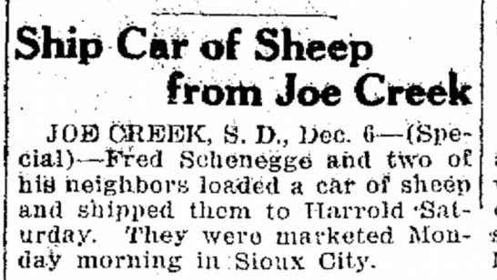- ;-,Ship Car of Sheep from Joe Greek JOE) GREEK,...