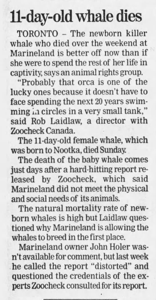 Marineland Canada, orca, Knootka calf, 19980610 -