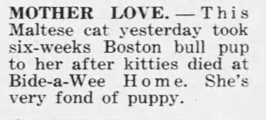 1922: Cat adopts Boston bull terrier puppy -