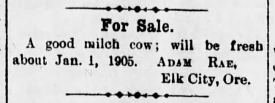 """12-09-1904Lincoln County Leader (Toledo, OR)Adam Rae selling good """"milch cow""""  -"""