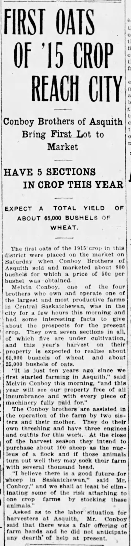 Conboy brothers of Asquith, 1915 harvest -