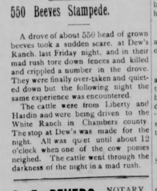 Stampede at Dew Ranch1923 - 550 Beeves Stampede. A drove ol about 550 head...