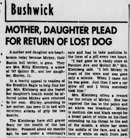 """Kitty Kleinberg"" re lost dog -"