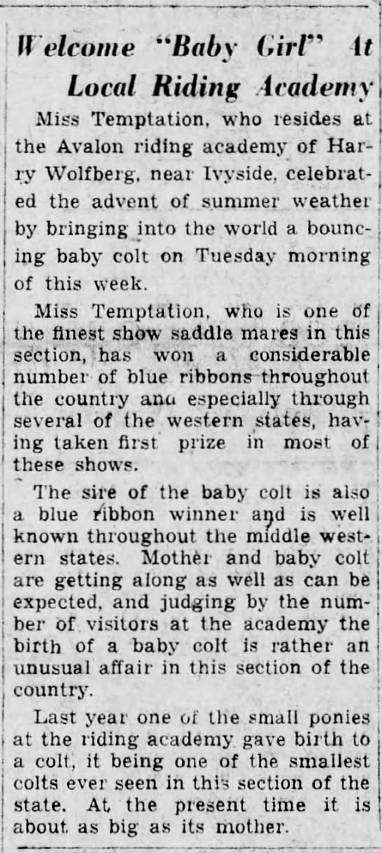 Harry'shorse has baby colt-30 March 1934 -