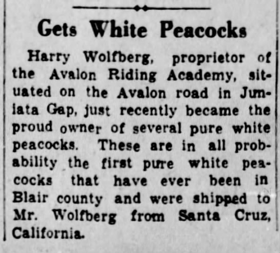 Harry acquires white peacocks-20 July 1939 -
