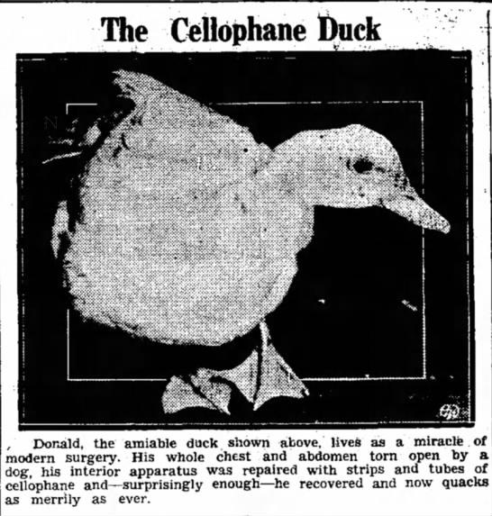 The Cellophane Duck -