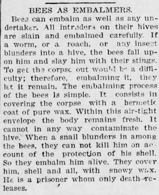 Bees as embalmers -