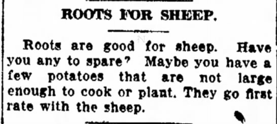 Roots for Sheep