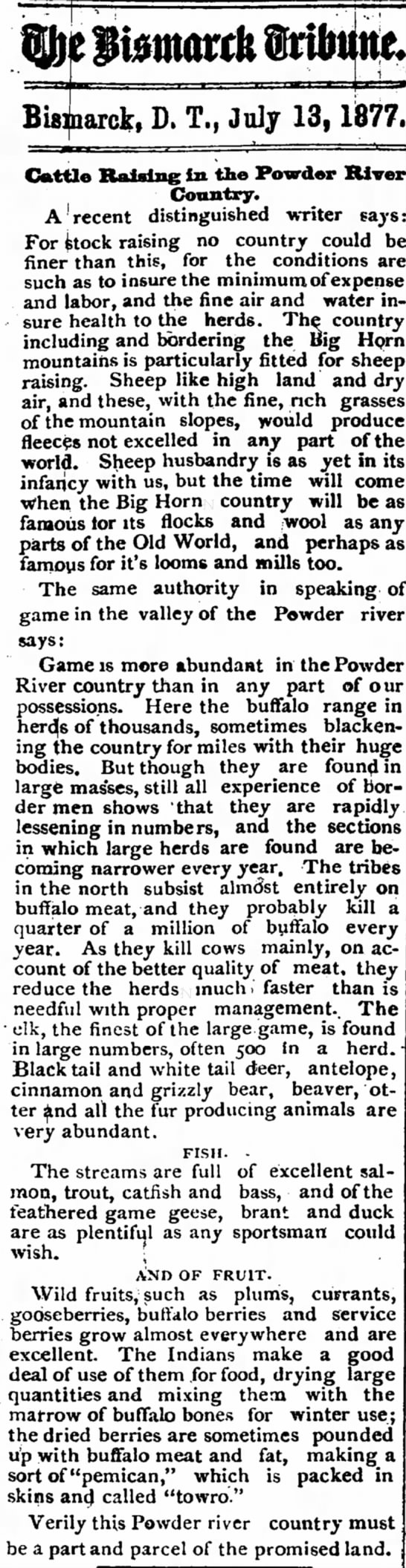 Buffalo in ND Bismark Tribune 13 July 1877 -