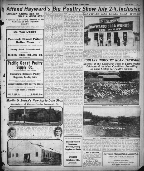Big Poultry Promotional section Tribune 1910 - Newspapers com