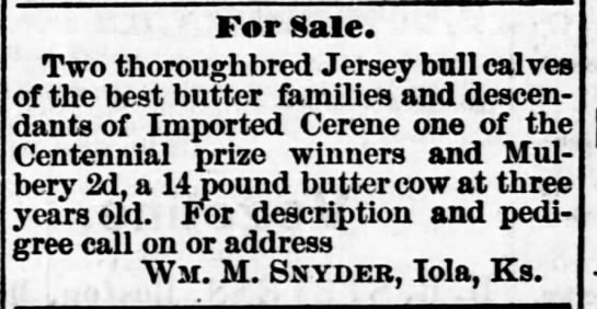 Add For Jersey Bull Calves For Sale Newspapers Com