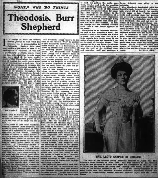Theodosia Shepherd article -