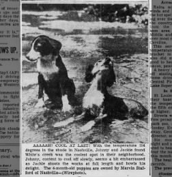 Puppies cool off in Nashville (1952)