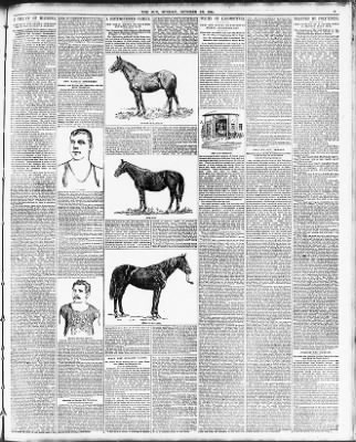 The Sun From New York New York On October 28 1894 Page 31